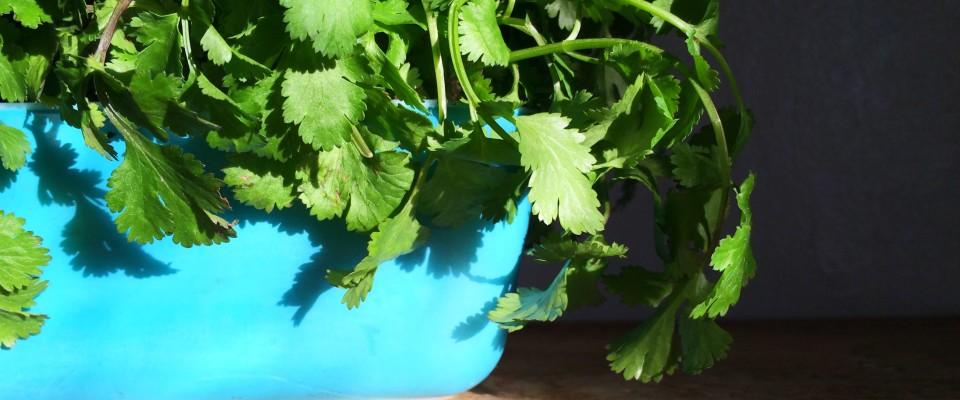my coco cilantro
